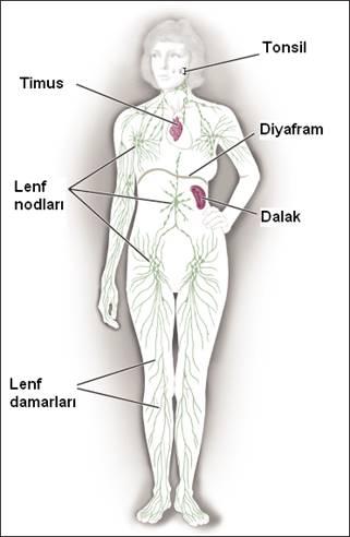 Türk Hematoloji Derneği